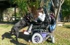 Delfi la labradora que acompaña y da movimiento a una docente con atrofia muscular espinal