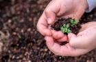 Día Mundial de la Protección de la Naturaleza una alternativa con los pies en el suelo